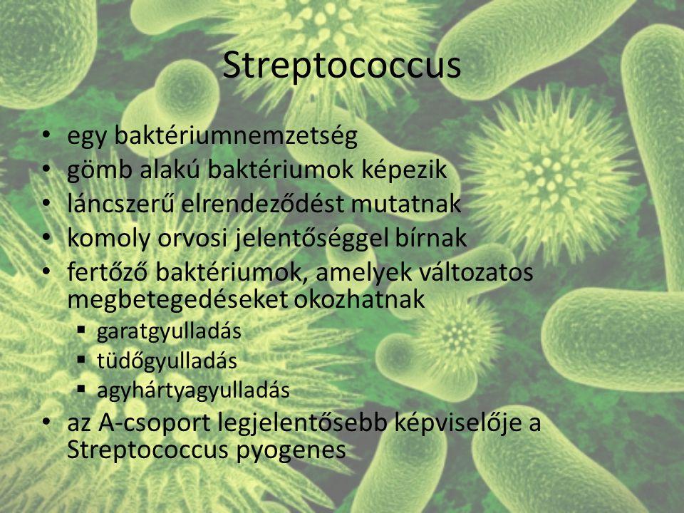 Streptococcus egy baktériumnemzetség gömb alakú baktériumok képezik láncszerű elrendeződést mutatnak komoly orvosi jelentőséggel bírnak fertőző baktériumok, amelyek változatos megbetegedéseket okozhatnak  garatgyulladás  tüdőgyulladás  agyhártyagyulladás az A-csoport legjelentősebb képviselője a Streptococcus pyogenes