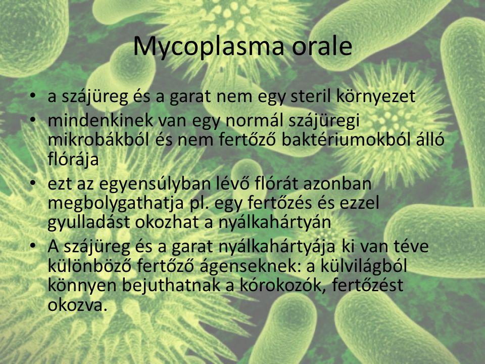 Mycoplasma orale a szájüreg és a garat nem egy steril környezet mindenkinek van egy normál szájüregi mikrobákból és nem fertőző baktériumokból álló flórája ezt az egyensúlyban lévő flórát azonban megbolygathatja pl.