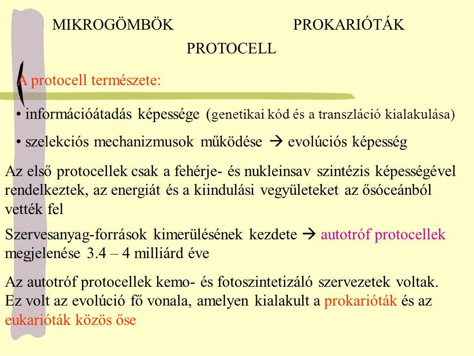 MIKROGÖMBÖKPROKARIÓTÁK PROTOCELL A protocell természete: információátadás képessége ( genetikai kód és a transzláció kialakulása) szelekciós mechanizm