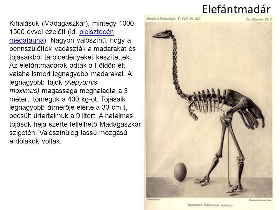 Elefántmadár Kihalásuk (Madagaszkár), mintegy 1000- 1500 évvel ezelőtt (ld. pleisztocén megafauna). Nagyon valószínű, hogy a bennszülöttek vadászták a