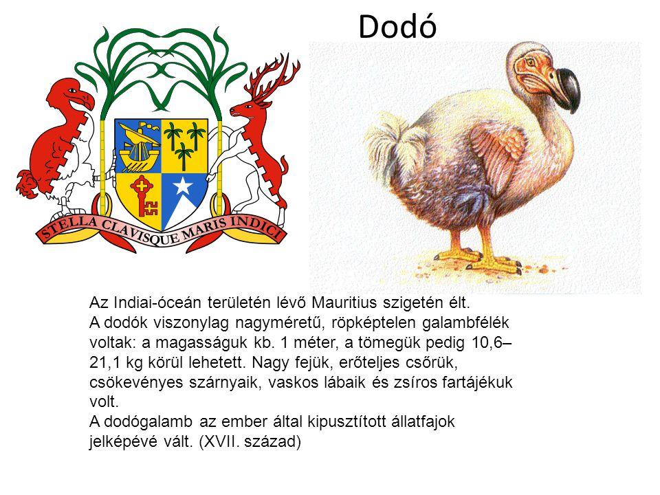 Dodó Az Indiai-óceán területén lévő Mauritius szigetén élt. A dodók viszonylag nagyméretű, röpképtelen galambfélék voltak: a magasságuk kb. 1 méter, a