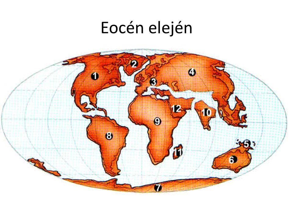 Meleg trópusi, szubtrópusi klíma (lassan hűl) Növényzet hasonló a maihoz Mai nyitvatermők – mamutfenyő, mocsári ciprus Sok zárvatermő – pálmák, babér és keménylombú erdők (barna szén) Színes virág, nektár, kettős megtermékenyítés, Hűvösebb időkben tölgy, nyír