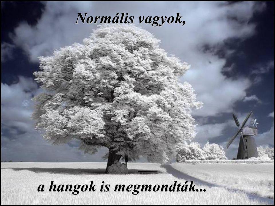 Normális vagyok, Normális vagyok, a hangok is megmondták...