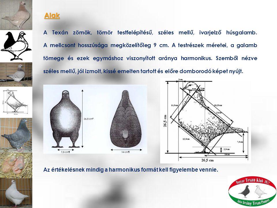 A kifejlett madár megközelítőleg 27 cm magas és hosszú.
