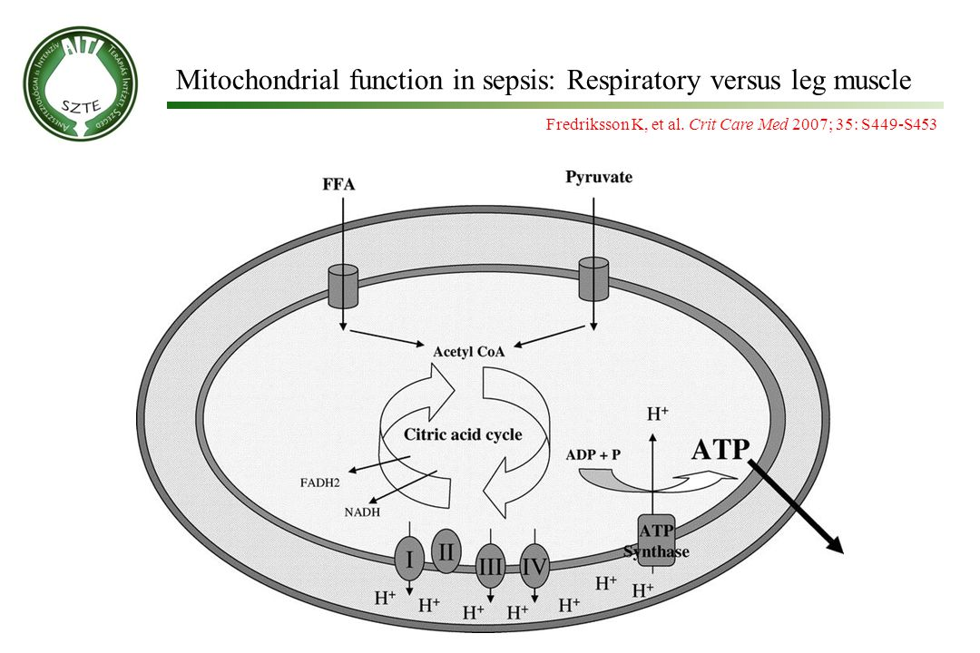 Fredriksson K, et al. Crit Care Med 2007; 35: S449-S453 Mitochondrial function in sepsis: Respiratory versus leg muscle