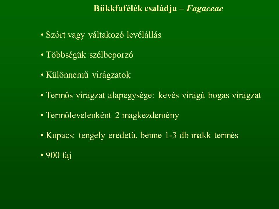 Diófavirágúak rendje – Juglandales Diófafélék családja – Juglandaceae Szórt levélállás, pálhátlan levelek Egylakiak, különnemű virágzatokkal Csonthéjas termés Alkaloidok