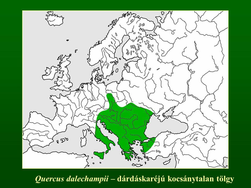 Quercus dalechampii – dárdáskaréjú kocsánytalan tölgy