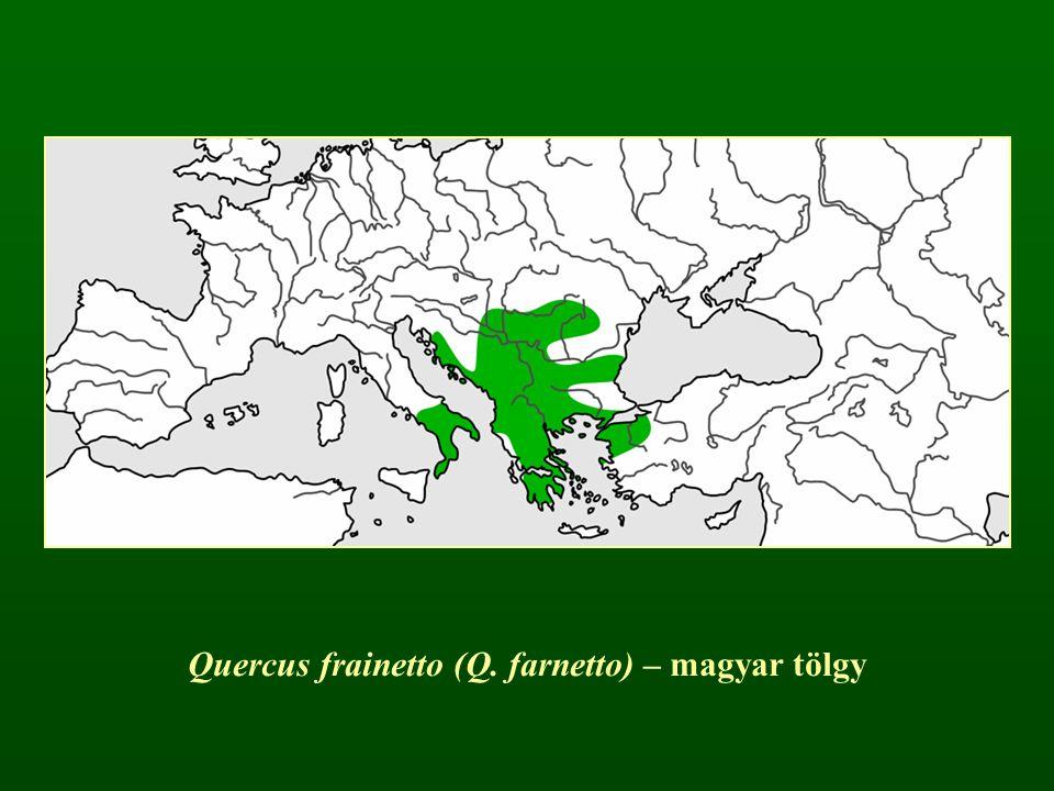 Quercus frainetto (Q. farnetto) – magyar tölgy