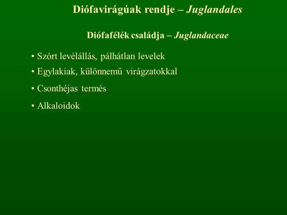 Diófavirágúak rendje – Juglandales Diófafélék családja – Juglandaceae Szórt levélállás, pálhátlan levelek Egylakiak, különnemű virágzatokkal Csonthéja