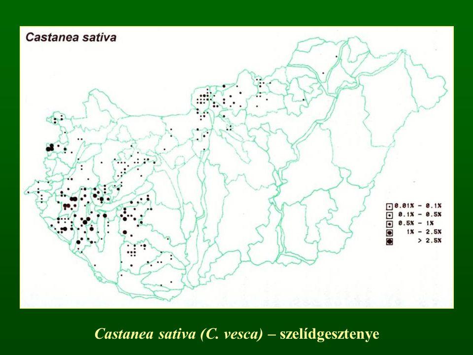 Tölgy nemzetség – Quercus Szórt levélállás Szélbeporzás Erőteljes hibridizáció 450 faj