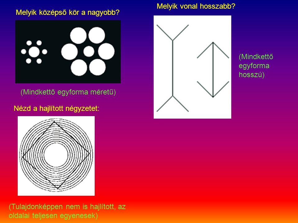 Melyik középső kör a nagyobb? Melyik vonal hosszabb? (Mindkettő egyforma méretű) (Mindkettő egyforma hosszú) Nézd a hajlított négyzetet: (Tulajdonképp