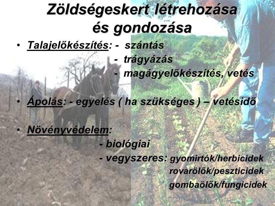 Zöldségeskert létrehozása és gondozása Talajelőkészítés: - szántás - trágyázás - magágyelőkészítés, vetés Ápolás: - egyelés ( ha szükséges ) – vetésid