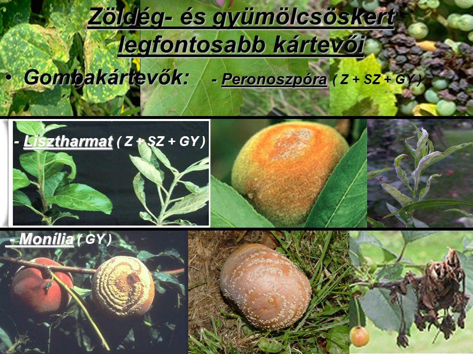 Zöldég- és gyümölcsöskert legfontosabb kártevői Gombakártevők: - PeronoszpóraGombakártevők: - Peronoszpóra ( Z + SZ + GY ) Lisztharmat - Lisztharmat (