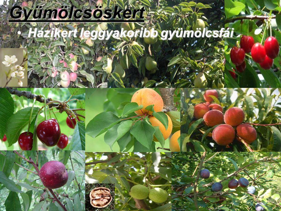 Gyümölcsöskert Házikert leggyakoribb gyümölcsfáiHázikert leggyakoribb gyümölcsfái