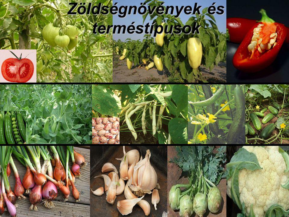 Zöldségnövények és terméstípusok