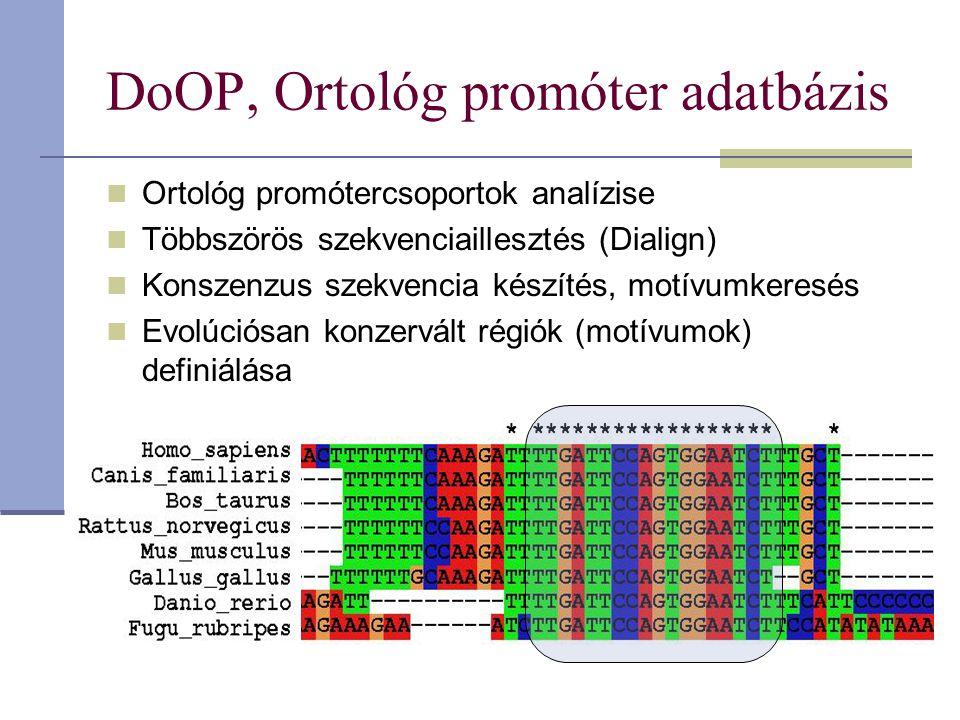 DoOP, Ortológ promóter adatbázis Ortológ promótercsoportok analízise Többszörös szekvenciaillesztés (Dialign) Konszenzus szekvencia készítés, motívumkeresés Evolúciósan konzervált régiók (motívumok) definiálása