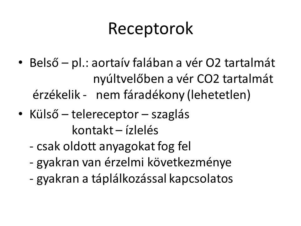 Receptorok Belső – pl.: aortaív falában a vér O2 tartalmát nyúltvelőben a vér CO2 tartalmát érzékelik - nem fáradékony (lehetetlen) Külső – telerecept