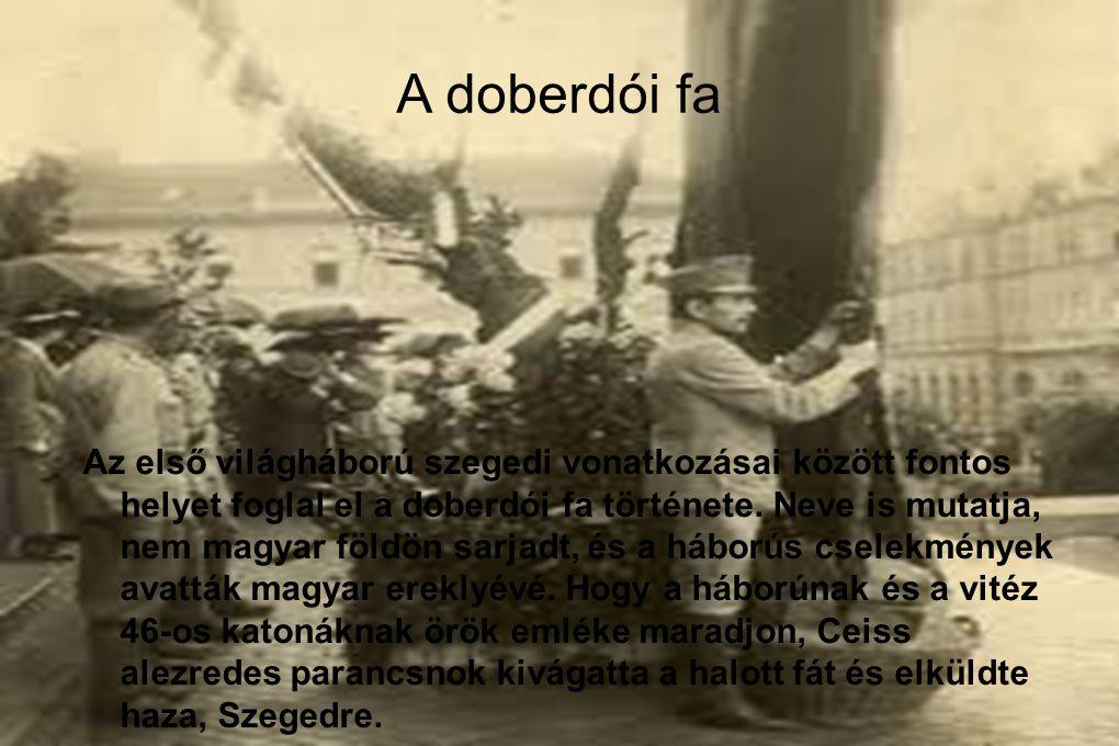 A doberdói fa Az első világháború szegedi vonatkozásai között fontos helyet foglal el a doberdói fa története. Neve is mutatja, nem magyar földön sarj