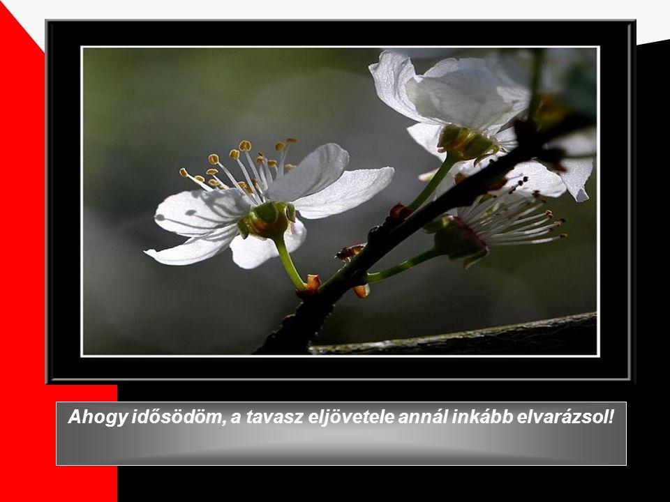 A titkos kert Zene: Richard Kleiderman Köszönet Kertész Zsuzsának a héber szöveg fordításáért.