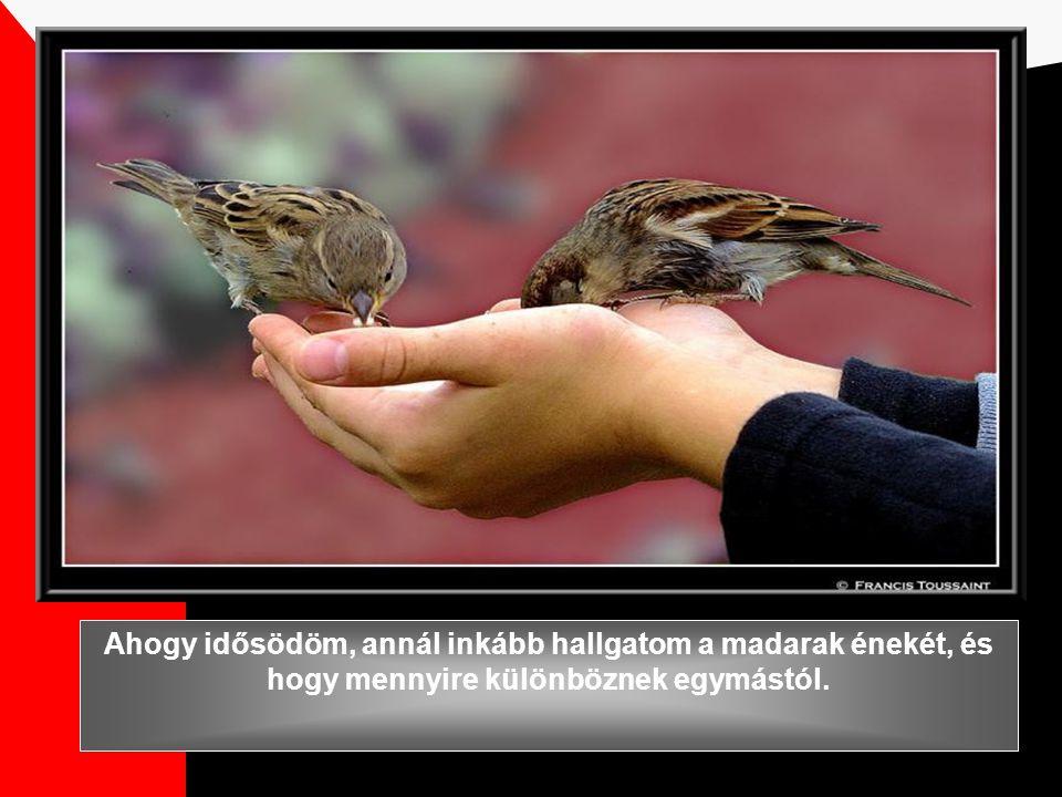 Ahogy idősödöm, annál inkább hallgatom a madarak énekét, és hogy mennyire különböznek egymástól.