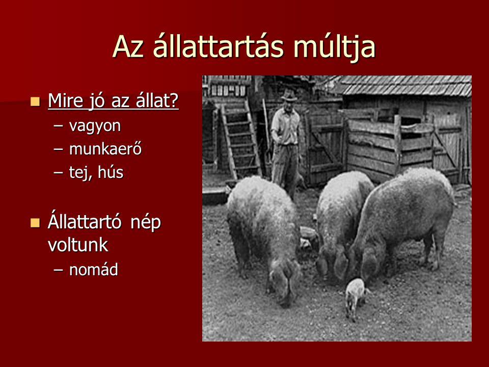 Az állattartás múltja Mire jó az állat? Mire jó az állat? –vagyon –munkaerő –tej, hús Állattartó nép voltunk Állattartó nép voltunk –nomád