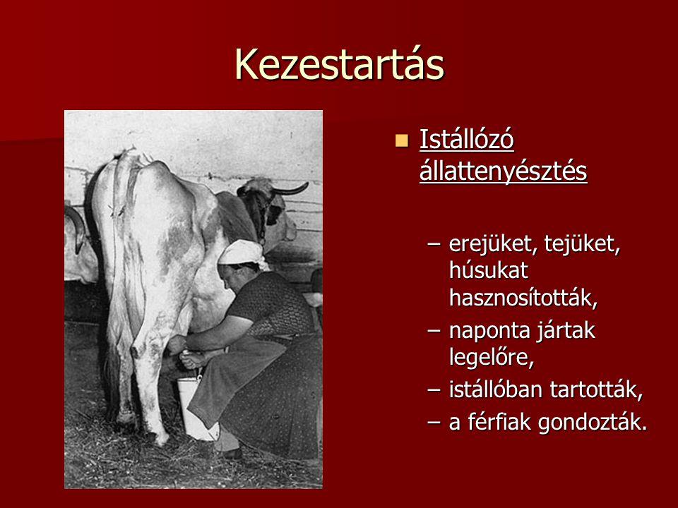 Kezestartás Istállózó állattenyésztés Istállózó állattenyésztés –erejüket, tejüket, húsukat hasznosították, –naponta jártak legelőre, –istállóban tart