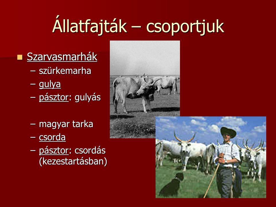 Állatfajták – csoportjuk Szarvasmarhák Szarvasmarhák –szürkemarha –gulya –pásztor: gulyás –magyar tarka –csorda –pásztor: csordás (kezestartásban)