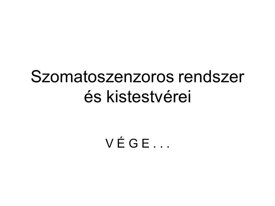 Szomatoszenzoros rendszer és kistestvérei V É G E...