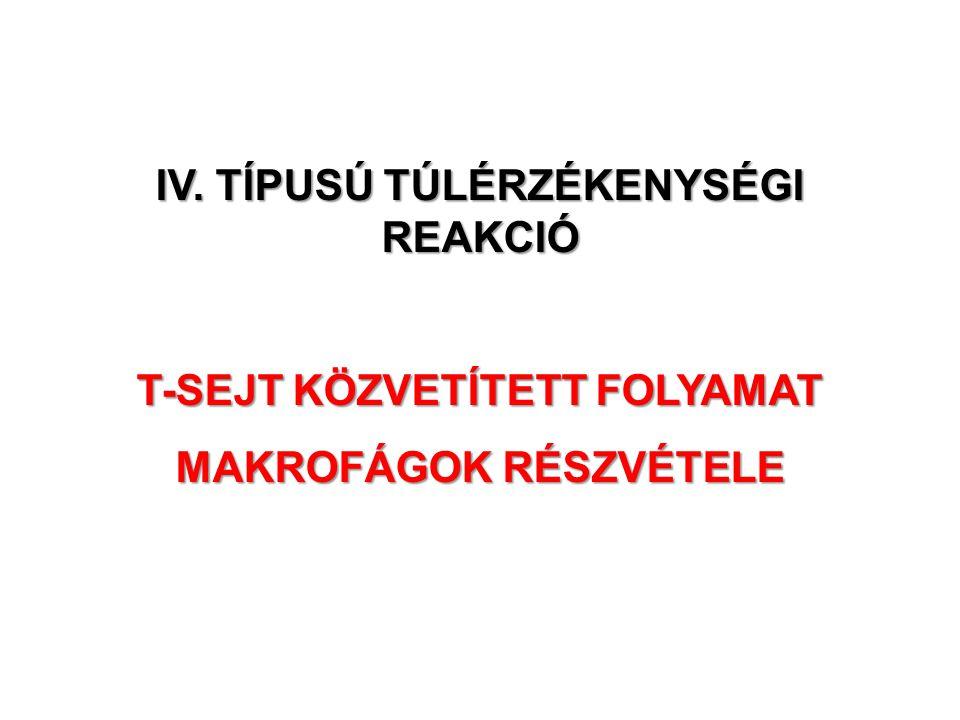 IV. TÍPUSÚ TÚLÉRZÉKENYSÉGI REAKCIÓ T-SEJT KÖZVETÍTETT FOLYAMAT MAKROFÁGOK RÉSZVÉTELE