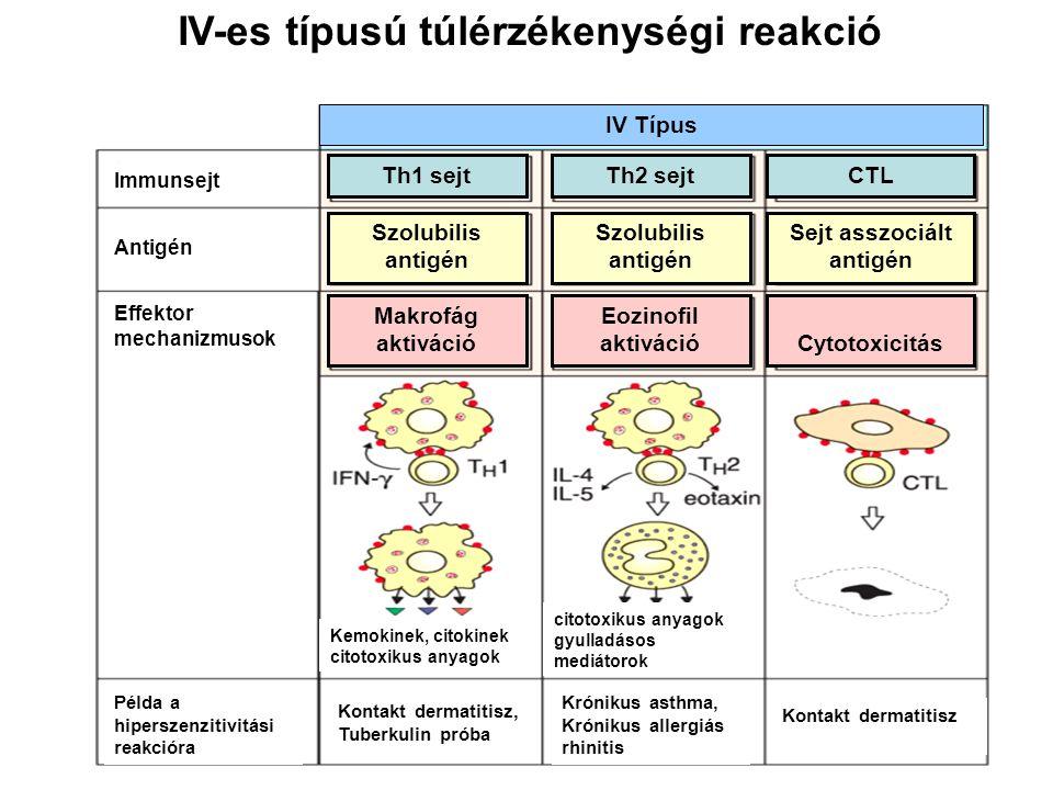 IV-es típusú túlérzékenységi reakció IV Típus Makrofág aktiváció Eozinofil aktivációCytotoxicitás Szolubilis antigén Szolubilis antigén Sejt asszociált antigén Th1 sejtTh2 sejtCTL Effektor mechanizmusok Antigén Példa a hiperszenzitivitási reakcióra Immunsejt Kontakt dermatitisz, Tuberkulin próba Krónikus asthma, Krónikus allergiás rhinitis Kontakt dermatitisz Kemokinek, citokinek citotoxikus anyagok gyulladásos mediátorok