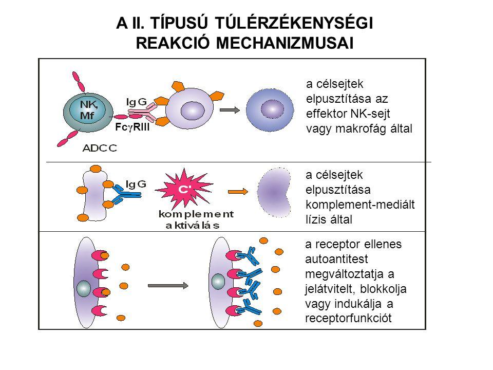 A nem fagocitálható szövet károsodik Abszorbeált (gyógyszer) antigén FRUSZTRÁLT FAGOCITÓZIS SZÖVETI ANTIGÉNEKET FELISMERŐ IgG ELLENANYAGOK KÖZVETÍTÉSÉVEL Kötődés Opszonizáció Internalizáció Opszonizált felület Kötődés Enzim felszabadulás Frusztrált fagocitózis Enzim felszabadulás