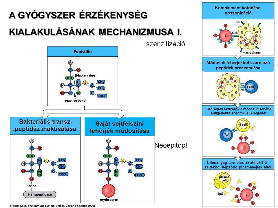 A GYÓGYSZER ÉRZÉKENYSÉG KIALAKULÁSÁNAK MECHANIZMUSA I. Bakteriális transz- peptidáz inaktiválása Saját sejtfelszíni fehérjék módosítása Komplement köt