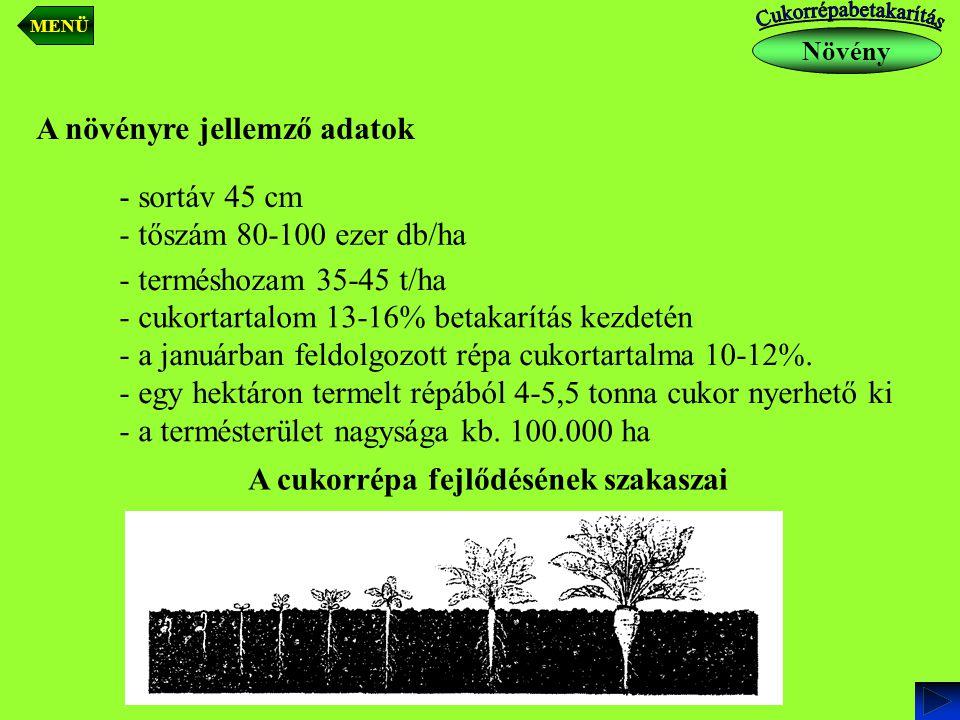A növényre jellemző adatok - sortáv 45 cm - tőszám 80-100 ezer db/ha - cukortartalom 13-16% betakarítás kezdetén - a januárban feldolgozott répa cukor