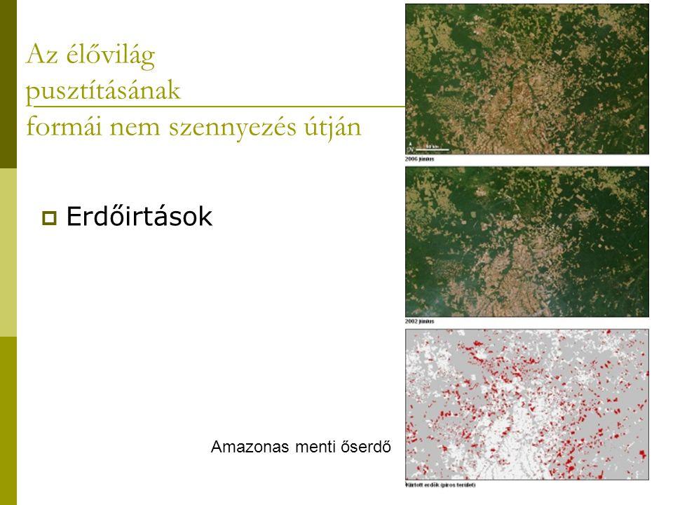 Az élővilág pusztításának formái nem szennyezés útján  Erdőirtások Amazonas menti őserdő