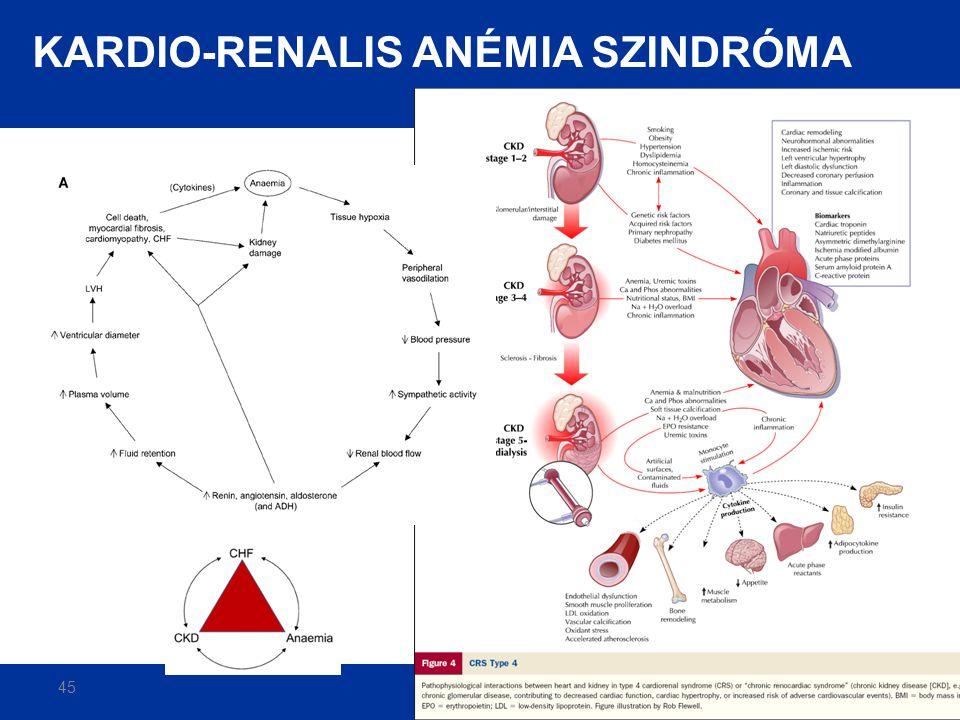 45 Silverberg D. Nephrol Dial Transplant 2003;18 (Suppl 2): ii7-ii12. KARDIO-RENALIS ANÉMIA SZINDRÓMA