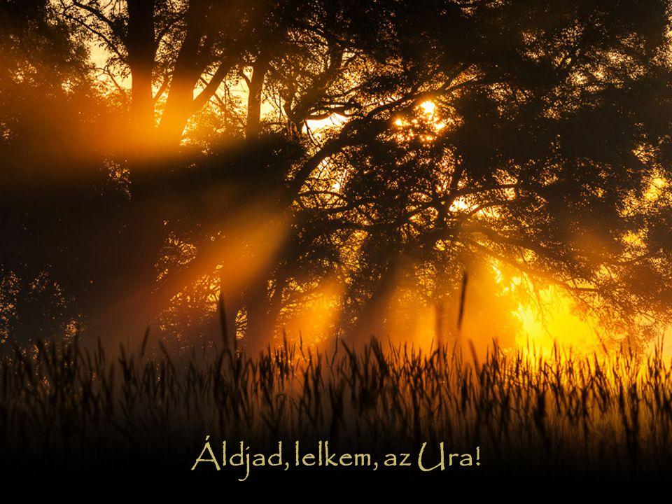 Uram, Istenem, igen nagy vagy, fenségbe és méltóságba öltöztél, világosságot vettél magadra, mint egy köpenyt.