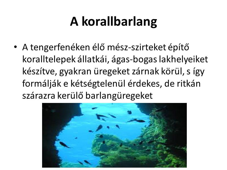 A korallbarlang A tengerfenéken élő mész-szirteket építő koralltelepek állatkái, ágas-bogas lakhelyeiket készítve, gyakran üregeket zárnak körül, s íg