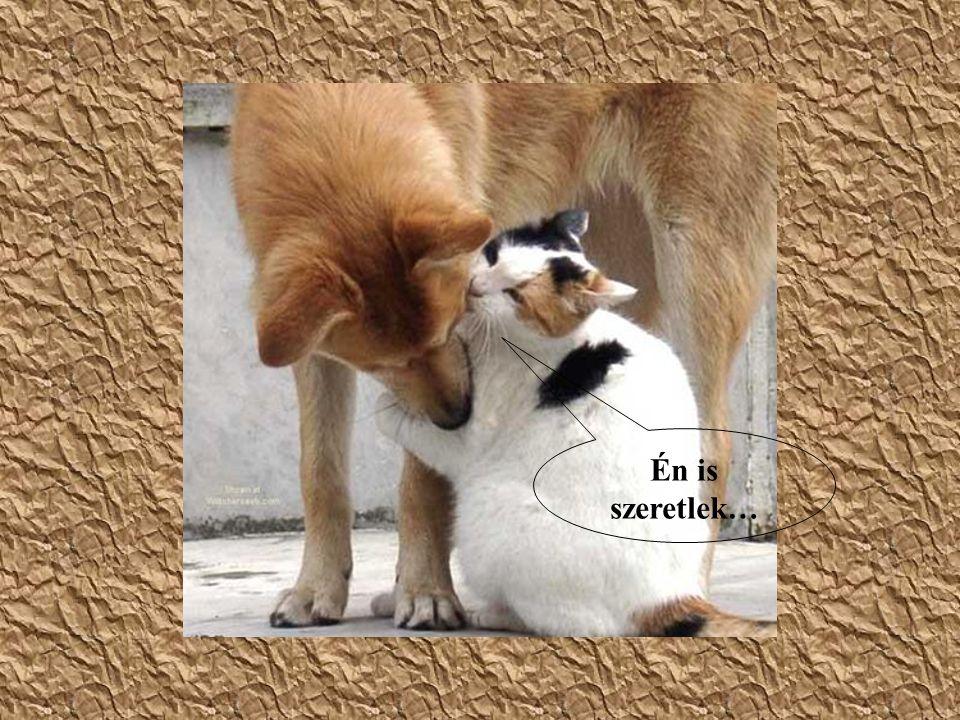 Én is szeretlek…