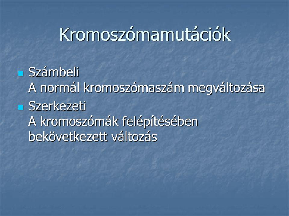 Kromoszómamutációk Számbeli A normál kromoszómaszám megváltozása Számbeli A normál kromoszómaszám megváltozása Szerkezeti A kromoszómák felépítésében bekövetkezett változás Szerkezeti A kromoszómák felépítésében bekövetkezett változás