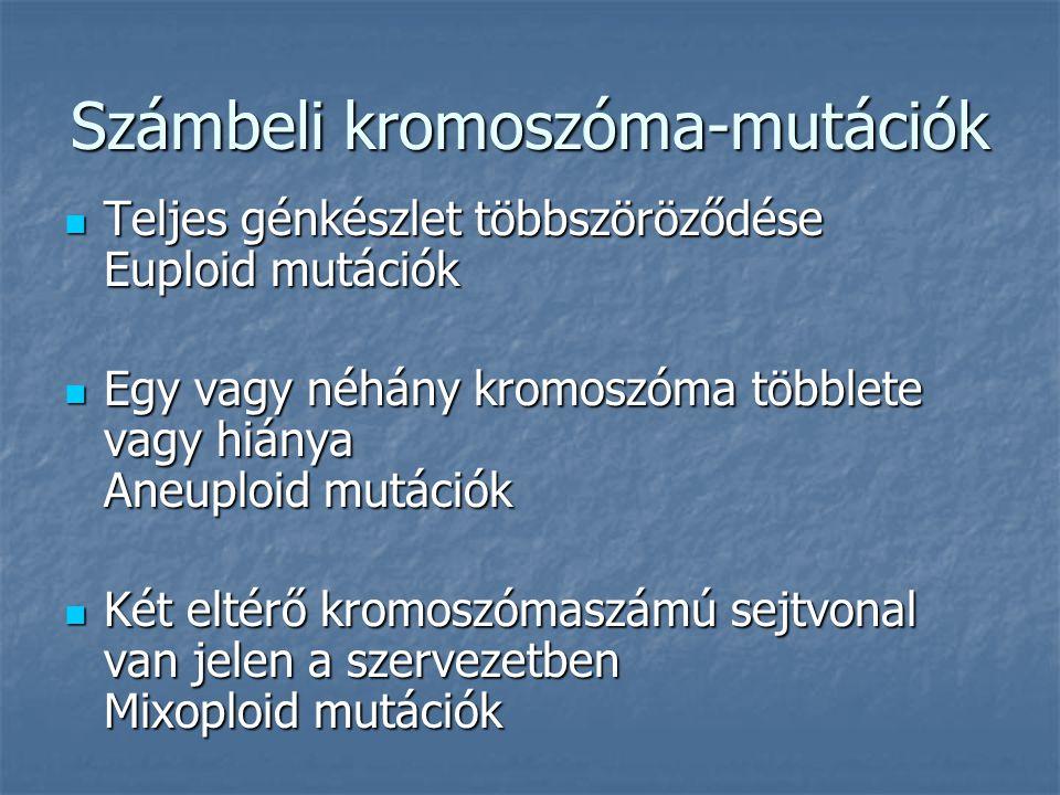Számbeli kromoszóma-mutációk Teljes génkészlet többszöröződése Euploid mutációk Teljes génkészlet többszöröződése Euploid mutációk Egy vagy néhány kromoszóma többlete vagy hiánya Aneuploid mutációk Egy vagy néhány kromoszóma többlete vagy hiánya Aneuploid mutációk Két eltérő kromoszómaszámú sejtvonal van jelen a szervezetben Mixoploid mutációk Két eltérő kromoszómaszámú sejtvonal van jelen a szervezetben Mixoploid mutációk