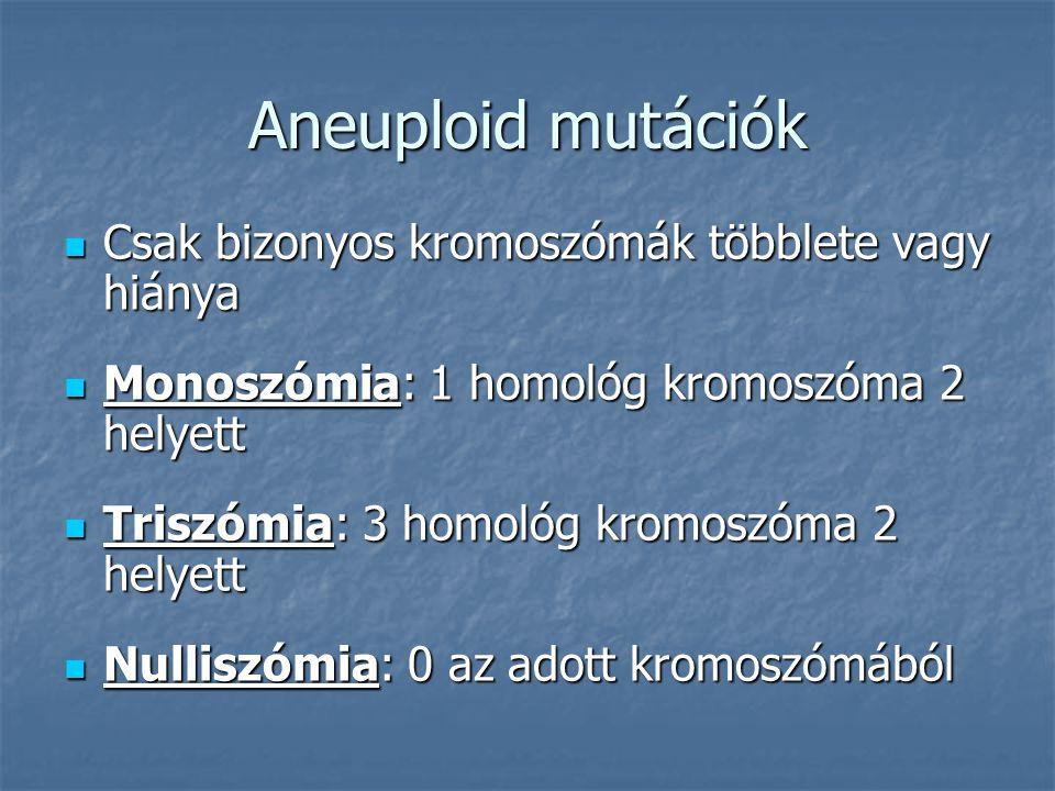 Aneuploid mutációk Csak bizonyos kromoszómák többlete vagy hiánya Csak bizonyos kromoszómák többlete vagy hiánya Monoszómia: 1 homológ kromoszóma 2 helyett Monoszómia: 1 homológ kromoszóma 2 helyett Triszómia: 3 homológ kromoszóma 2 helyett Triszómia: 3 homológ kromoszóma 2 helyett Nulliszómia: 0 az adott kromoszómából Nulliszómia: 0 az adott kromoszómából