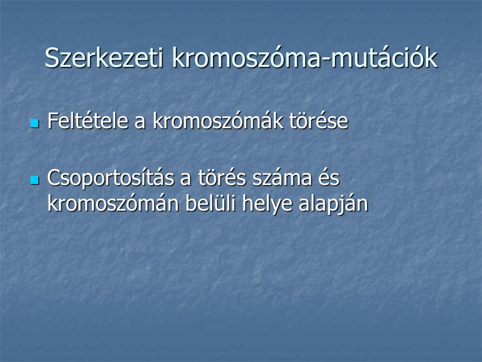 Szerkezeti kromoszóma-mutációk Feltétele a kromoszómák törése Feltétele a kromoszómák törése Csoportosítás a törés száma és kromoszómán belüli helye alapján Csoportosítás a törés száma és kromoszómán belüli helye alapján