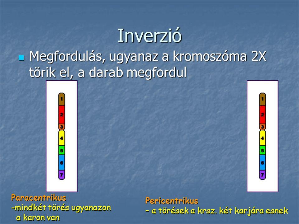 Inverzió Megfordulás, ugyanaz a kromoszóma 2X törik el, a darab megfordul Megfordulás, ugyanaz a kromoszóma 2X törik el, a darab megfordul Pericentrikus – a törések a krsz.