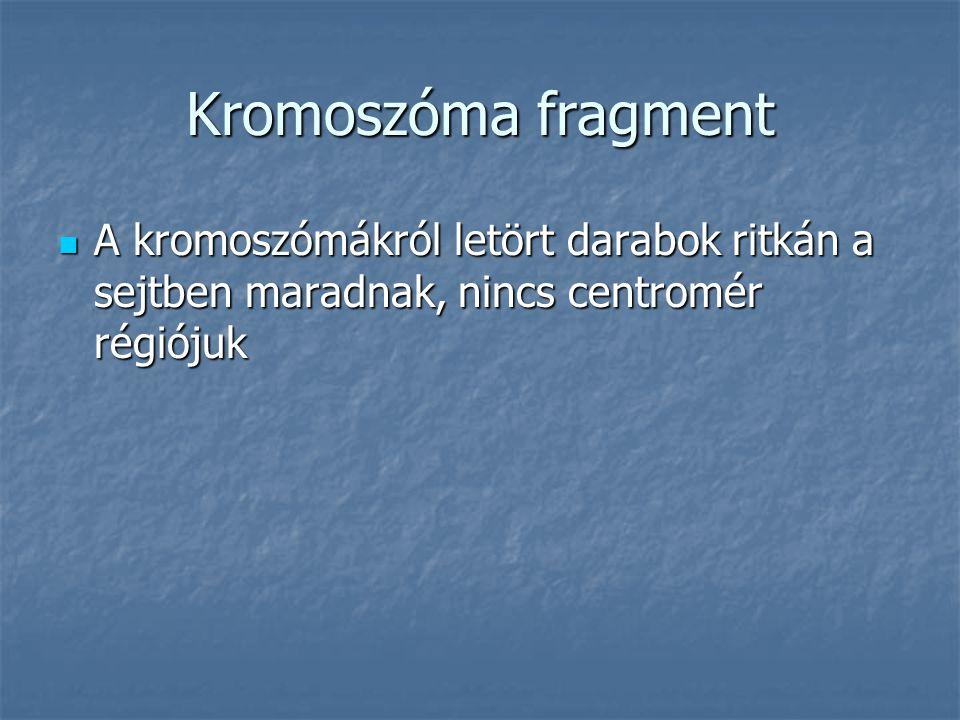 Kromoszóma fragment A kromoszómákról letört darabok ritkán a sejtben maradnak, nincs centromér régiójuk A kromoszómákról letört darabok ritkán a sejtben maradnak, nincs centromér régiójuk