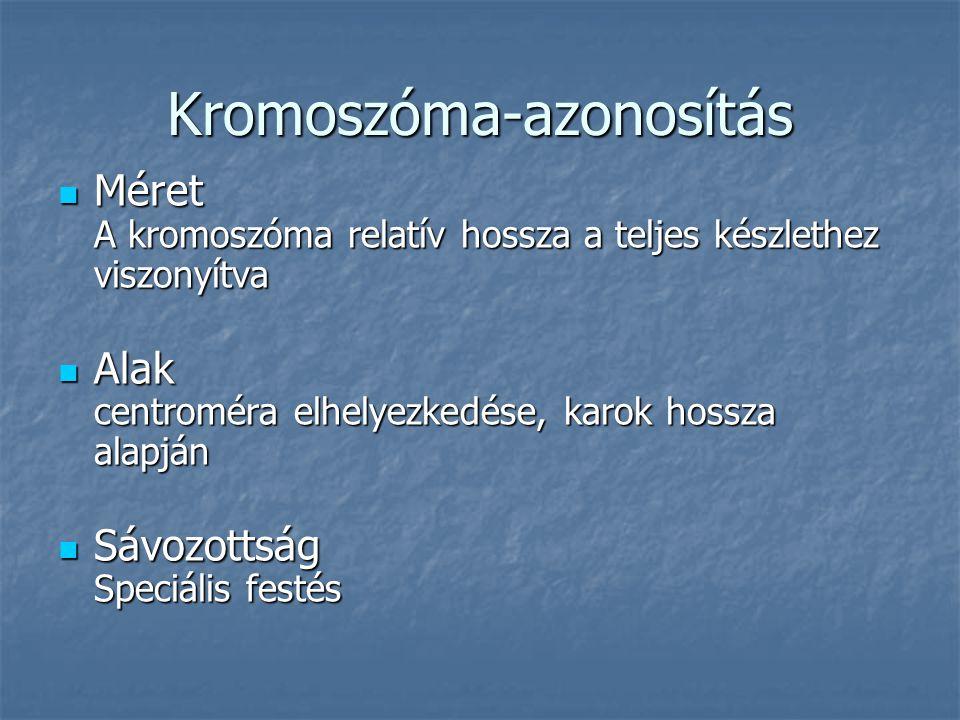 Kromoszóma-azonosítás Méret A kromoszóma relatív hossza a teljes készlethez viszonyítva Méret A kromoszóma relatív hossza a teljes készlethez viszonyítva Alak centroméra elhelyezkedése, karok hossza alapján Alak centroméra elhelyezkedése, karok hossza alapján Sávozottság Speciális festés Sávozottság Speciális festés