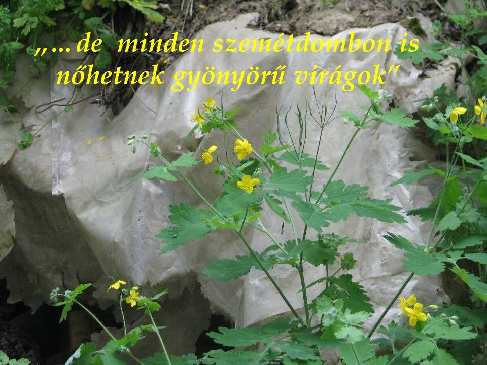 """,,…de minden szemétdombon is nőhetnek gyönyörű virágok"""""""