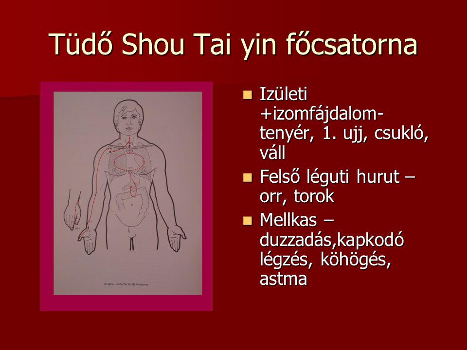 Tüdő Shou Tai yin főcsatorna Izületi +izomfájdalom- tenyér, 1.