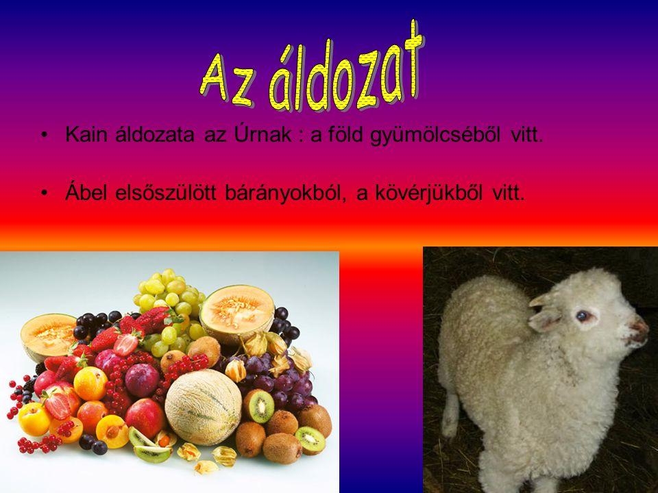 Kain áldozata az Úrnak : a föld gyümölcséből vitt. Ábel elsőszülött bárányokból, a kövérjükből vitt.