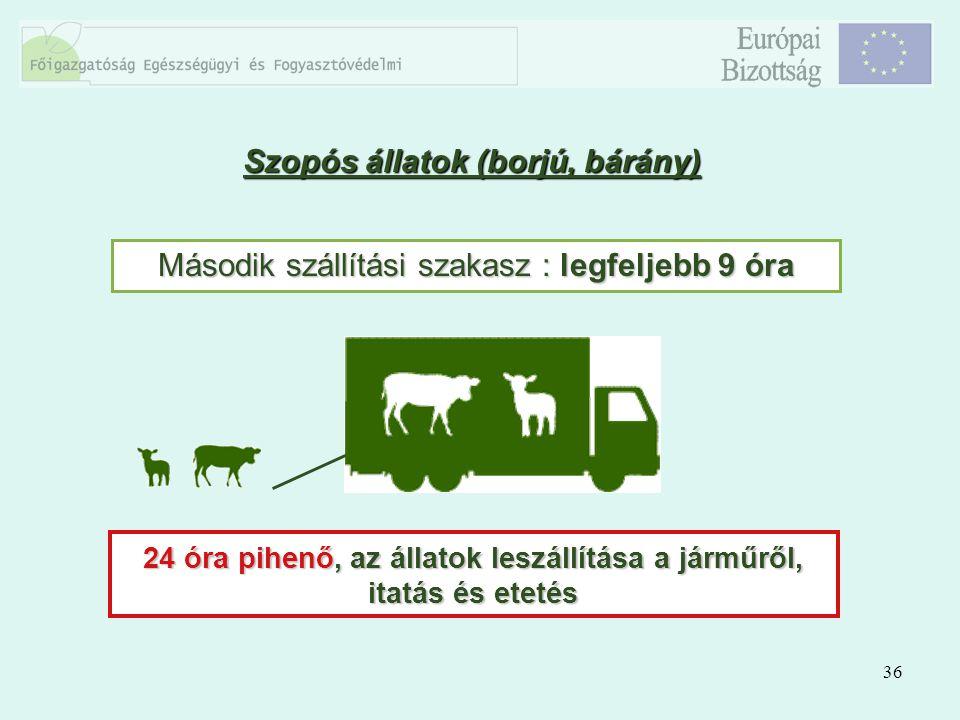 36 Szopós állatok (borjú, bárány) Második szállítási szakasz : legfeljebb 9 óra 24 óra pihenő, az állatok leszállítása a járműről, itatás és etetés