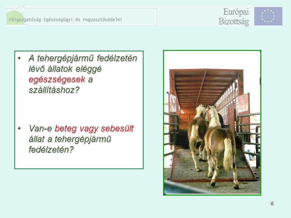 6 A tehergépjármű fedélzetén lévő állatok eléggé egészségesek a szállításhoz?A tehergépjármű fedélzetén lévő állatok eléggé egészségesek a szállításho
